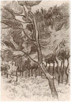 Pine Trees in the Garden of the Asylum - Vincent van Gogh . Created in Saint-Rémy in October - Located at Van Gogh Museum Van Gogh Drawings, Tree Drawings Pencil, Van Gogh Paintings, Vincent Van Gogh, Desenhos Van Gogh, Van Gogh Arte, Van Gogh Landscapes, Artist Van Gogh, Art Simple