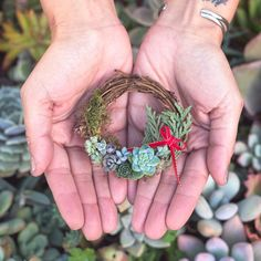 The tiniest Succulent Wreath you ever did see ✨. A bunch of new supplies came in and we just had to tack on these TINY wreaths. Succulent Gifts, Succulent Wreath, Succulent Gardening, Cacti And Succulents, Planting Succulents, Planting Flowers, Tiny Cactus, Cactus Flower, Christmas Plants