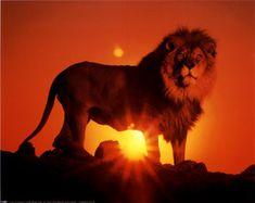 Lion king by: Bermadita Mahashi