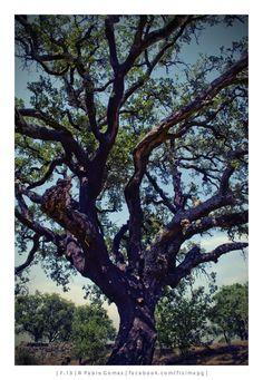 [2013 - Briteiros - Portugal ] #fotografia #fotografias #photography #foto #fotos #photo #photos #local #locais #locals #paisagem #paisaje #landscape #paisagens #paisajes #landscapes #city #cities #europa #europe #natureza #naturaleza #nature #arvore #arvores #arbol #arboles #tree #trees @Visit Portugal @ePortugal