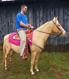!! PRICE REDUCED GOLDEN PALOMINO PONY !! - $299 (Science Hill, KY)