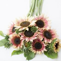 Shade Flowers, Cut Flowers, Flower Farm, My Flower, Country Wedding Arches, Beautiful Gardens, Beautiful Flowers, Sunflower Garden, Flowers Garden