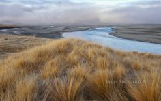 Tussock country NZ
