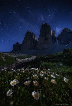. : moonlight beauties : . by Martin Pfister on 500px
