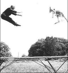 kangaroo and a trampoline - everyone needs a gym buddy