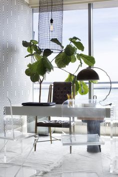 A pair of Lucite chairs and a fiddle-leaf fig tree in a home office.