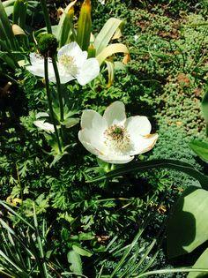 #garden#flowers#white#nature#love#:)#<3#Hungary#green