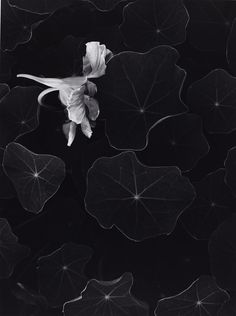 Philadelphia Museum of Art - Collections Object : Nasturtiums, Oceano, California
