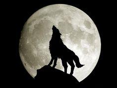 Chiedi la luna