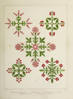 Floriated ornament : a series of thirty-one designs