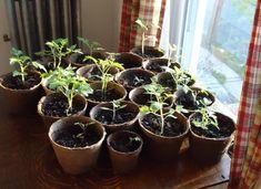Verduras y hortalizas para cultivo en interior 1