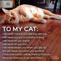 TO MY CAT:  I WILL NEVER LET YOU DOWN.    Carson Cats in Need of Fosters - Even for Temporary Situations.  PLEASE SAVE LIVES & FOSTER   So Many Beautiful Cats in Carson!!! https://www.facebook.com/carsoncatrescue?fre