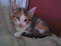 #PicklestheDrummer #Cats #CuteAnimals #Pets #kitten #cutepets