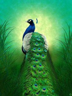 L'animal, ou plutôt l'oiseau d'Amitabha, est le paon, l'oiseau le plus splendide qui soit. La raison du choix du paon n'est pas très claire, et diverses explications ont été avancées. Du fait des yeux des plumes de sa roue, le paon est parfois associé avec la conscience, mais cela ne semble pas particulièrement approprié ici. Il se pourrait que ce soit parce que le paon mange des serpents, y compris des serpents venimeux, ce qui suggère une immunité au poison, une immunité aux souillures…