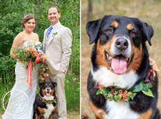 Dog floral collar (and one gorgeous bride and groom) from McKenzie Powell Floral and Event Design; Coordinated by Taylor'd Events by Jennifer and Amelia Soper Photography capturing all the gorgeousness of the day!