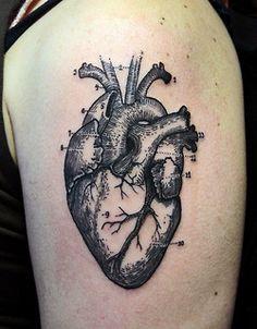 tattoos inked tattoo ink line work linework anatomical heart heart tattoo anatomical heart tattoo science tattoo