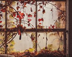 Dark Window Photography, Urban Decay Forgotten Abandoned Building Photograph, Architecture Photo, Nature Natural Orange Autumn Leaves