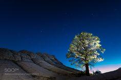 Lumina Tree by eetschman