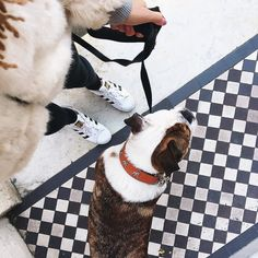 Samantha Maria: Walkies with @rileyandfranklin