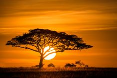 Sunrise on the Serengeti - Africa Afrika Tattoos, Art Actuel, African Tree, Sunset Tattoos, African Art Paintings, Landscape Tattoo, Sunset Photography, Lightning Photography, Sunsets