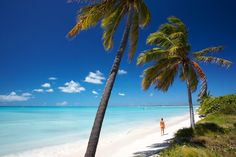 Barbuda has the longest stretch of beach in the Caribbean - need I say more...