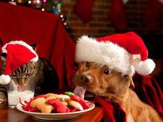 Bonito Perro Desgustando su Rica y Especial Cena Navideña #Perros #Navidad #DoggieDoor #NoCompresAdopta