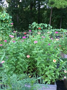 Zinnias are the best crop this year