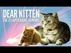 Dear Kitten: The Disappearing Humans – Purina® Friskies - Cute Kittens Videos I Love Cats, Cute Cats, Funny Cats, Funny Animals, Cute Animals, Talking Animals, Cute Kitten Gif, Cat Gif, Kittens Cutest