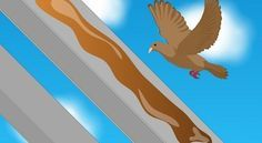 How To Get Rid Of Pigeons Naturally Get Rid Of Pigeons Pigeon Pigeon Deterrent