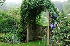 clematis on gated country styled arbor