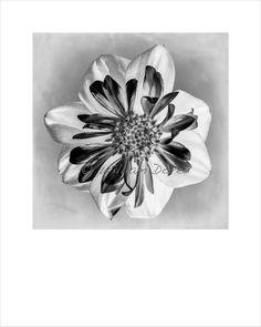 "8x10 Fine Art Print ""Dahlia X-Ray"", Floral Art Print, Flower Wall Decor"