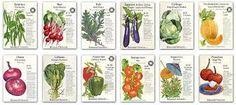Image result for botanical green vegetables illustrations