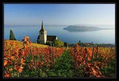 Ligerz, Bielersee Do Love, Switzerland, Vineyard, Country Roads, World, Outdoor, Vine Yard, The World, Outdoors