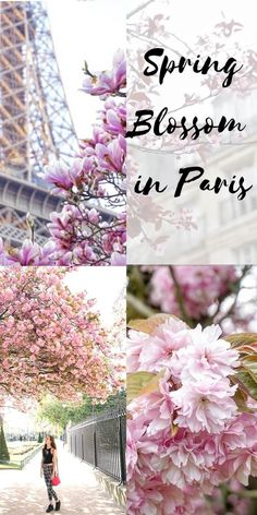spring blossom in paris