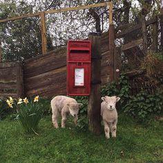 the exmoor postal service