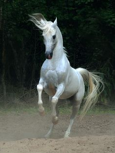 excelentes fotos de caballos - Taringa!