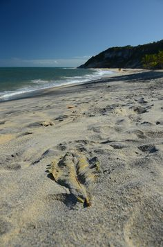 Bahia is one of the only places in Brazil, where you can watch sea turtles swim around while laying on the beach.   Here one of the 10 best beaches in Brazil according to the Brazilian Beach Bible Guia 4 Rodas: Praia do Espelho.