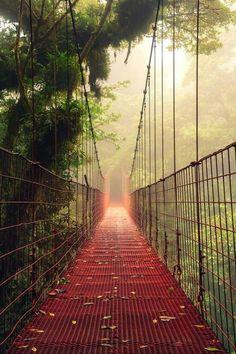 Fog bridge, Monteverde Cloud Forest Costa Rica