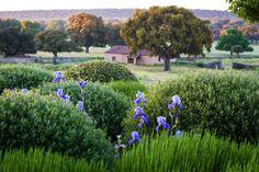 The Planthunter – Design and Life: Xanthe White, Miguel Urquijo and Phillip Johnson Plant Design, Garden Design, Landscape Architecture, Landscape Design, New Zealand Landscape, Gravel Garden, Old Trees, Mediterranean Garden, Native Plants