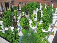 Rooftop Aeroponic Garden NYC. New York restaurateur John Mooney has redefined garden with a rooftop that is now a home to melons, mint, garbanzo, tomatoes, lettuce, and much more. He is the first chef in the U.S. to grow all of his produce on a rooftop farm. Their produce is grown in sixty vertical tower aeroponic systems, designed and engineered by Future Growing LLC., of Orlando, Florida.