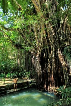 Enchanted 400-Year-Old Balete (Banyan) Tree by Edgar Alan Zeta-Yap Lazi, Siquijor, Philippines
