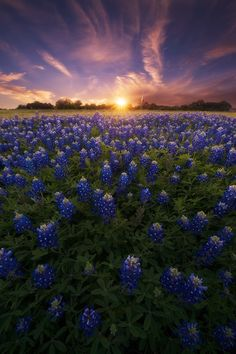 A Canvas of Texas Spring - Austin - Texas - USA