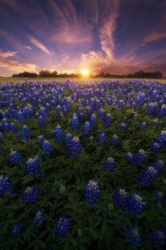 A Canvas of Texas Spring - Austin - Texas - USA