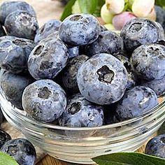 Blueberry, named Elizabeth, for zones 4-9