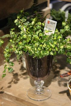I like the idea of planting in a glass
