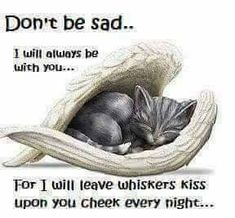 #cats #felines #kitten #animals #pets
