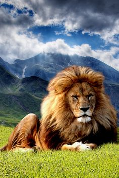 Jesucristo El Gran Yo soy Reina sobre TODAS las Naciones sus rodillas se doblaran y toda lengua confesara que JESUS ES REY