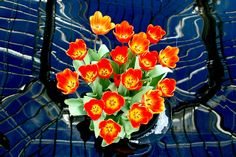 """Tulips In A Pool Reflecting The [Phipps] Conservatory Ceiling [Pittsburgh],"" by Marc_714, via Flickr"