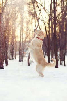 Check out Dancing in the Snow by Marina's Pet Box on Creative Market