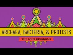 ▶ Old & Odd: Archaea, Bacteria & Protists thr 4 Kingdoms- CrashCourse Biology #35 - YouTube 12:17 Single celled organisms are the most abundant organisms on earth! Protists are Eukaryotic organisms that make up the Kingdom Protista under the Domain Eukarya. Bacteria & Archaea are their own Prokaryotic Domain. Both have plasma cytoplasm, ribosomes & DNA. Prokayotes means before the nucleus. Neither procreate sexually. Love this guy, funny!